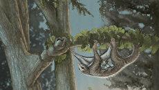 Так художник представил себе семью Maiopatagium, летающих белок Юрского периода