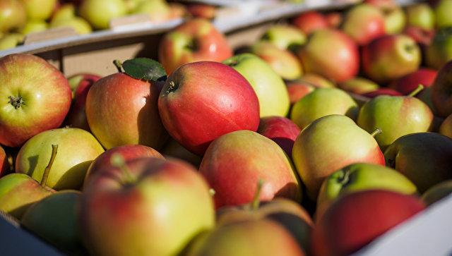 В БиГ требуют наказать виновных за срыв экспорта яблок в Россию