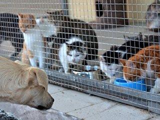 Приют для бездомных животных. Архивное фото