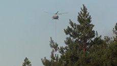 Природный пожар в Усть-Донецком районе Ростовской области. 18 августа 2017