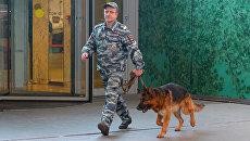 Кинолог с собакой после сообщения о минировании в Москве. Архивное фото