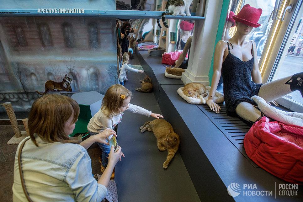 Посетители котокафе Республика кошек в Санкт-Петербурге, где ежемесячно проходят благотворительные акции Все оттенки кошачьего по раздаче кошек из городских приютов в добрые руки