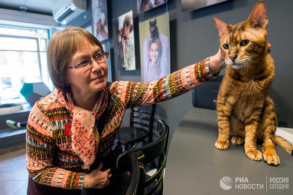Посетительница котокафе Республика кошек в Санкт-Петербурге, где ежемесячно проходят благотворительные акции Все оттенки кошачьего по раздаче кошек из городских приютов в добрые руки.