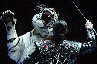 Дрессура хищников Баронеты под руководством Натальи и Андрея Широкаловых на гала-шоу всемирного фестиваля циркового искусства Идол