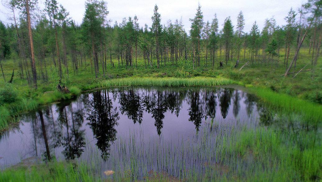 На границе Томской и Новосибирской областей появится новый заповедник