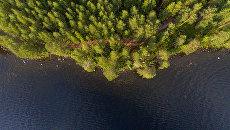 ОНФ предлагает следить за состоянием лесов с помощью беспилотников