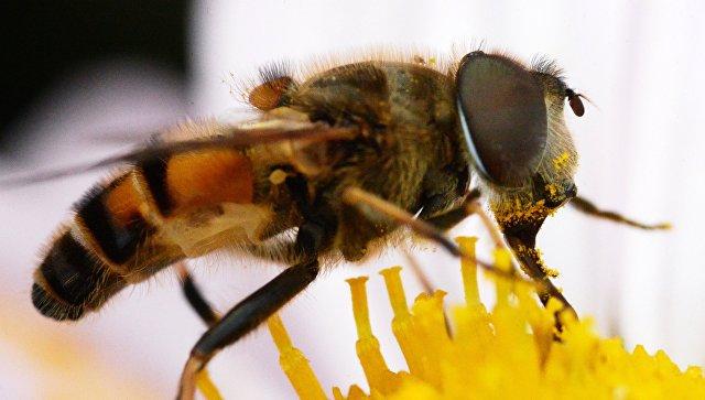 Пчела. Архивное фото