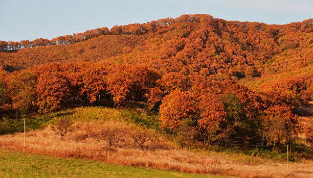 Осень в Приморском крае. Архивное фото