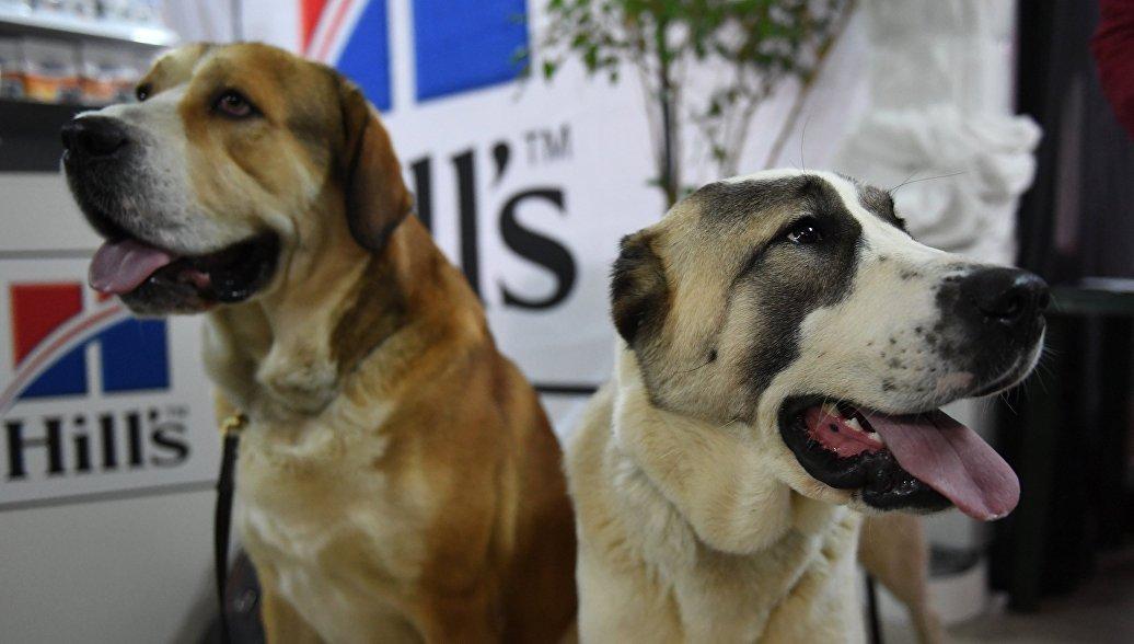 Люди переживают за собак больше, чем за себе подобных, выяснили ученые