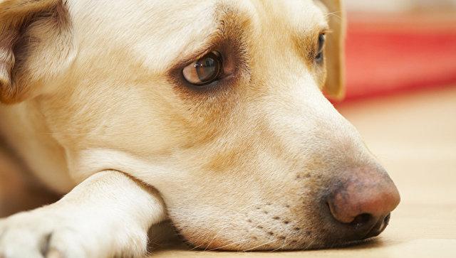 В Колумбии брошенная в аэропорту собака умерла от тоски по хозяину