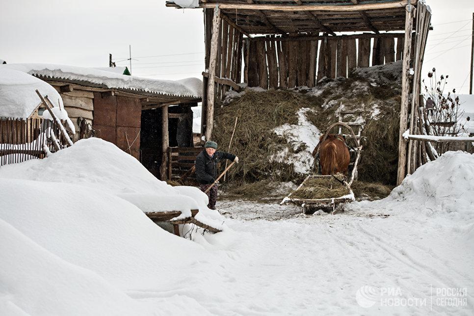 Во дворе семьи Имухаметовых. Село Желтое Оренбургской области.