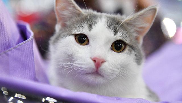 Краснодарские волонтеры думают, как достать котов из квартиры живодера