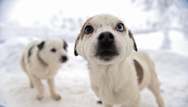 Жителя Ростовской области обвиняют вубийстве 5-ти щенков