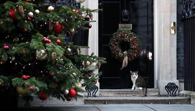 Санитарная служба 40 раз заезжала наДаунинг-стрит из-за бездействия кота