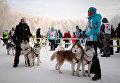 Участники заезда на собачьих упряжках в соревнованиях по ездовому спорту в Новосибирске