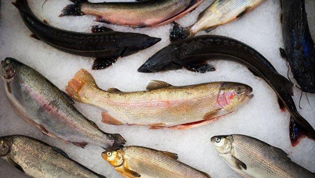 В Ростовской области объем производства товарной рыбы вырос на 7,8%