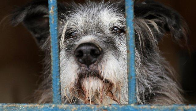 Собака в вольере приюта для бездомных собак. Архивное фото