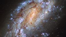 Галактика NGC 1559 в созвездии Сетки, один из самых одиноких объектов космоса. Архивное фото