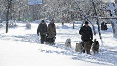 Горожане гуляют с собаками в сквере на Ленинском проспекте в Москве. Архивное фото