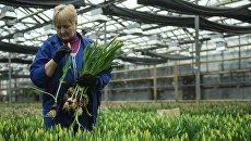 Сотрудник в теплице по выращиванию цветов на предприятии ГБУ Озеленение в Москве. Архивное фото