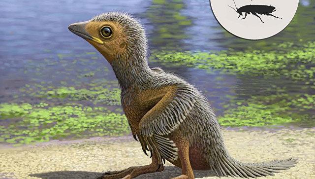 Птенец птицы, живший на Земле 127 миллионов лет назад