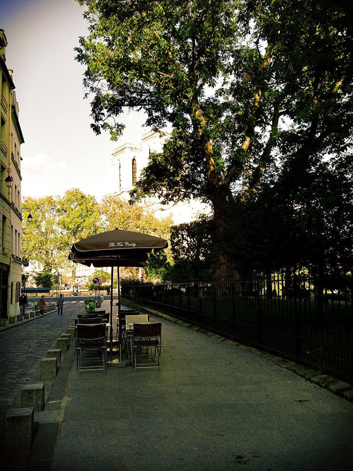 Парижский дуб