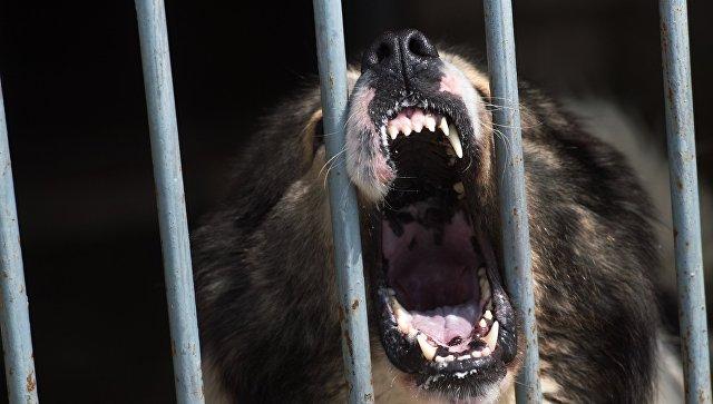 В Волгоградской области сторожевые собаки загрызли пьяного рабочего