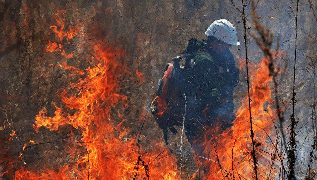 Неподалеку от Афин вспыхнул сильный лесной пожар