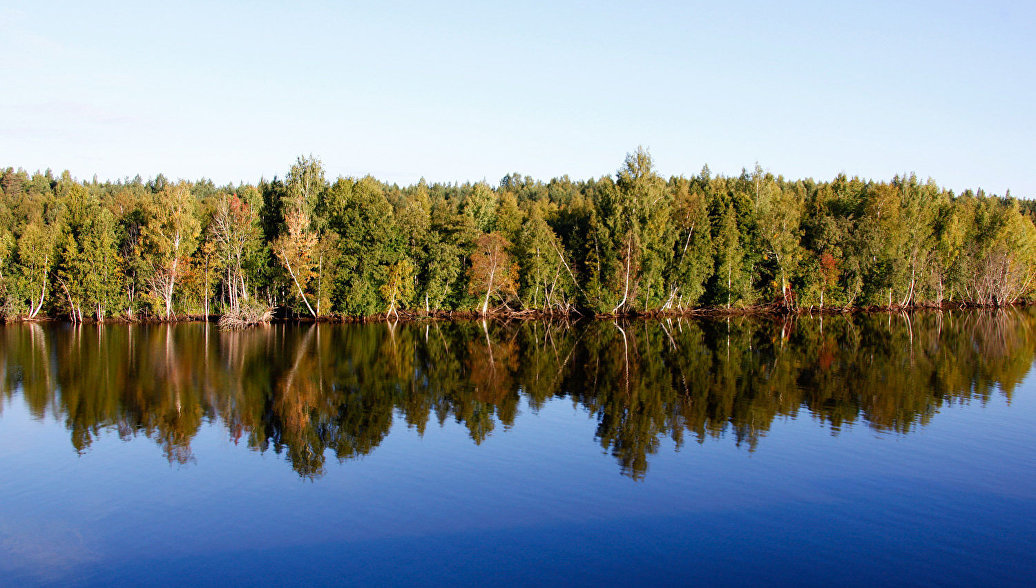 Создание лесопаркового пояса обсуждается в Санкт-Петербурге