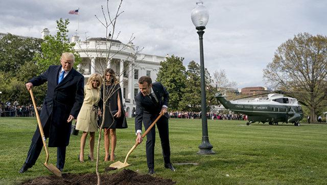 Макрон и Трамп посадили у Белого дома привезенный из Франции саженец дуба. Архивное фото