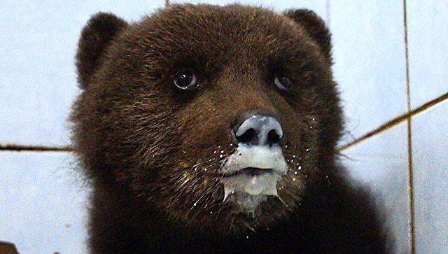 Медвежонок в центре Велес