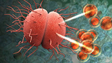 Молекулы антибиотика атакуют гонококк