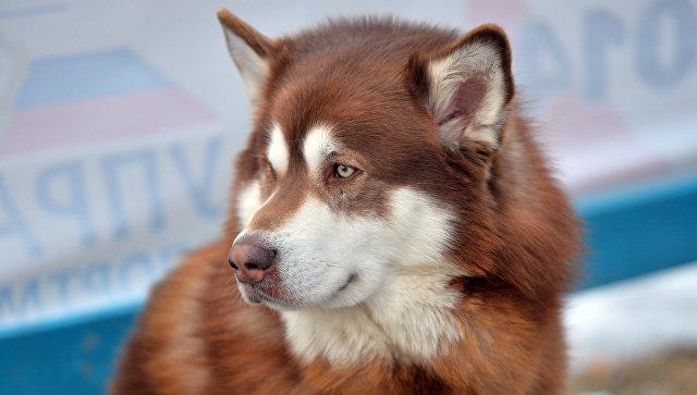 Младенец попал в клинику  послу нападения домашней собаки вПетербурге