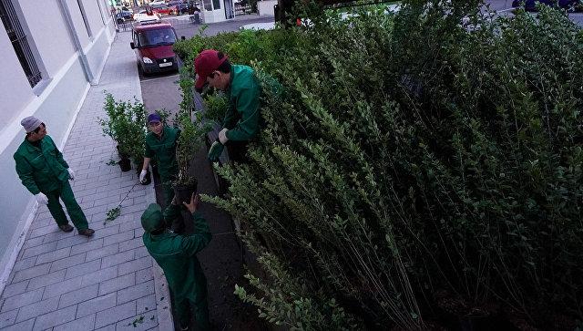 Высадка кустарника в Москве в рамках программы благоустройства