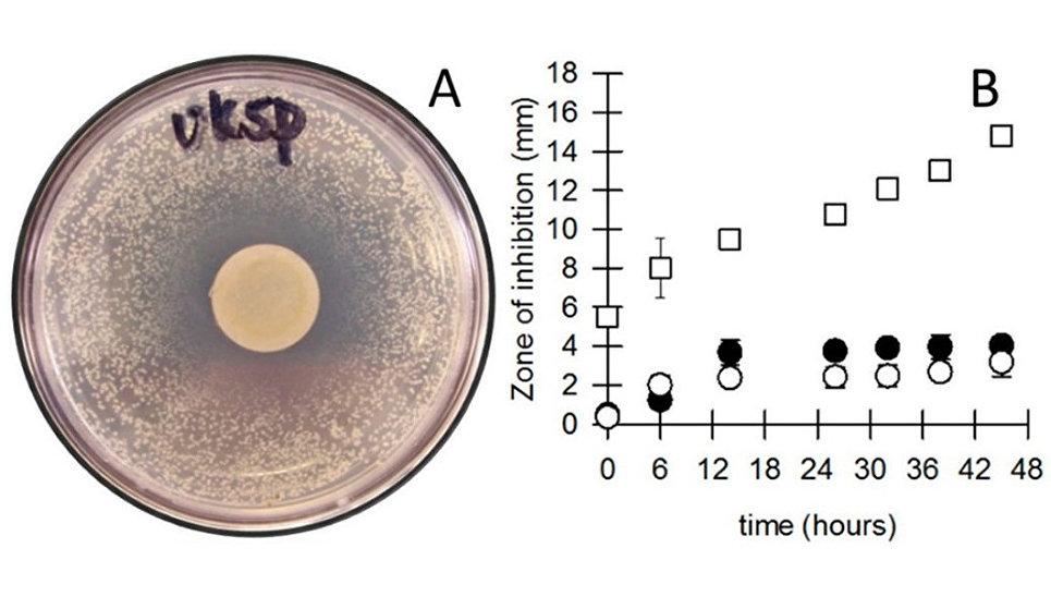 Грязные и заразные: на каких деньгах микробов больше