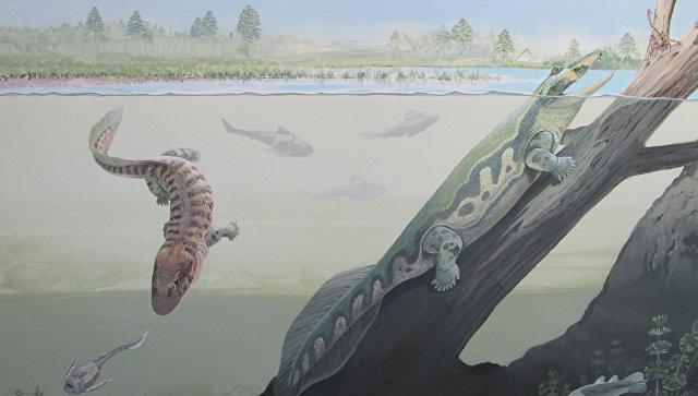 Так художник представил себе амфибий Umzantsia (слева) и Tutusius (справа), древнейших четвероногих Земли