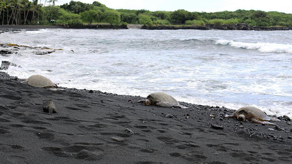 Пляж Пуналу на Гавайях