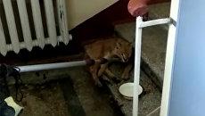 Рысенок, найденный в подъезде жилого дома на Кутузовском проспекте в Москве