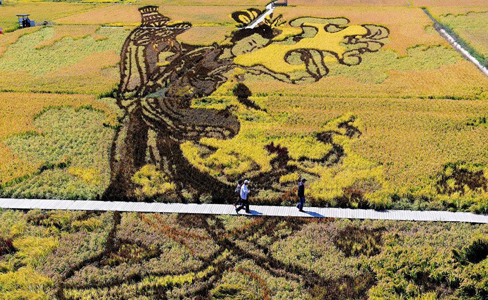 Изображение в рисовом поле