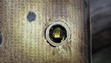 Пчела в утепленном улье