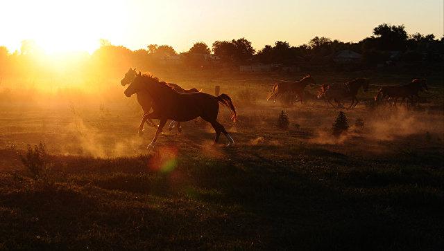 Приморец похитил у женщины коня и пытался добраться на нем до Уссурийска