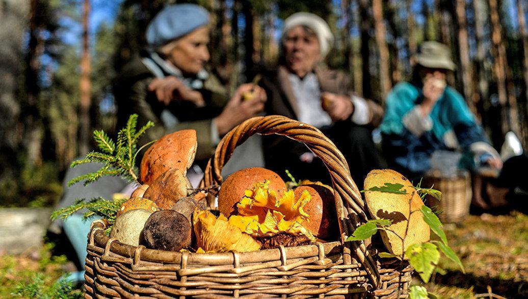 В лес да по грибы: основные правила тихой охоты в России