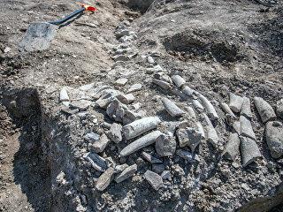 Скелет древнего кита, найденный на участке будущей железной дороги-подхода к Крымскому мосту. 17 августа 2018