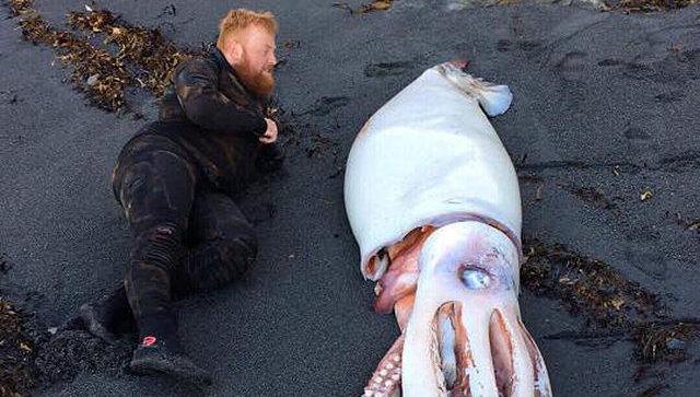 В Новой Зеландии нашли гигантского кальмара
