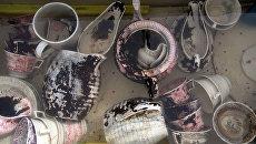 Центр подводных исследований РГО поднял артефакты с корабля XIX века