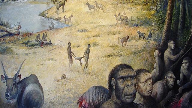 Ученые выяснили, чем питались древние люди-«щелкунчики»