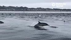 Дельфины переплывают через Монтерейский залив