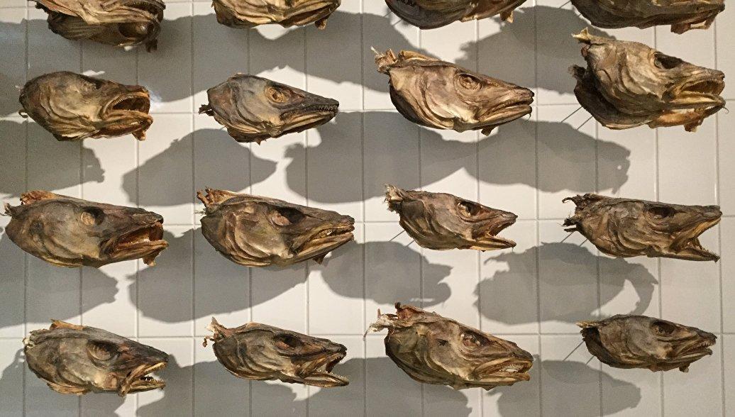 Рыбьи головы в Морском музее Рейкьявика