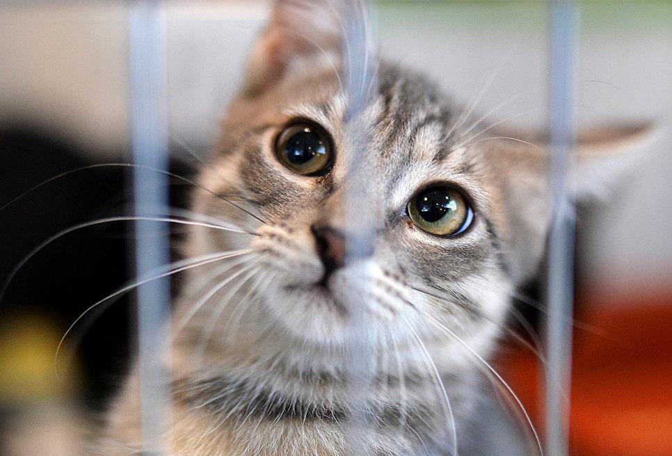 Кошка из приюта на выставке. Архивное фото