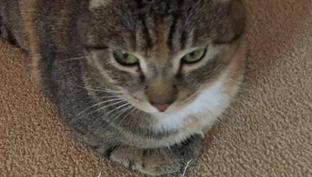 Кошка, которая помогла жительнице Великобритании излечиться от рака. Архивное фото